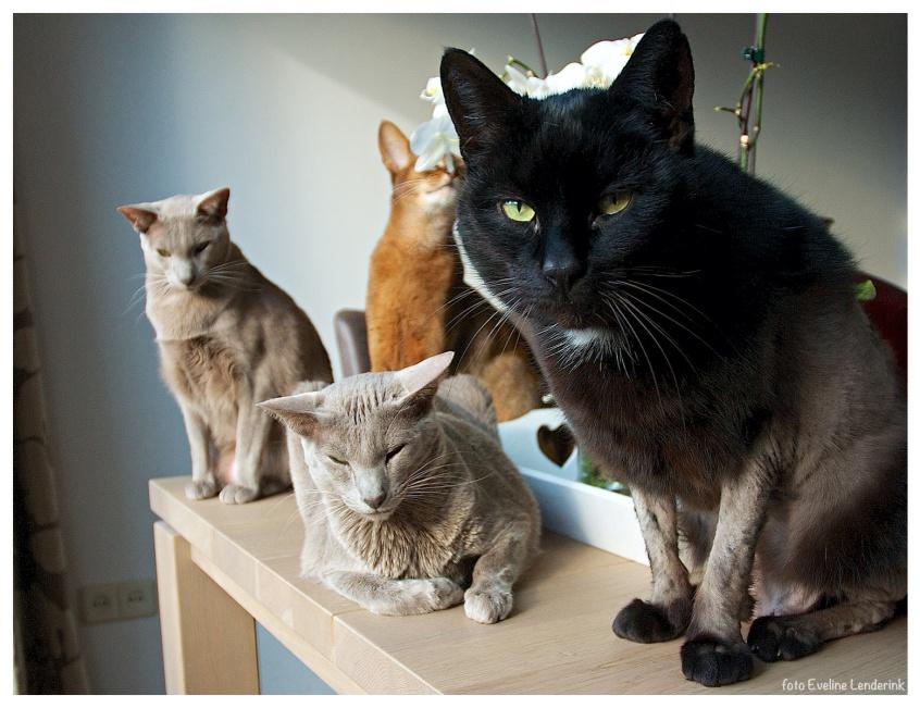 Vier katten in de zon
