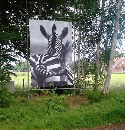 zebra - versie 2