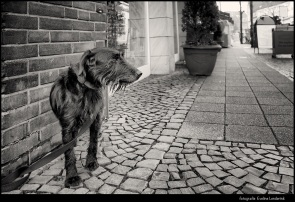 Wachtende hond