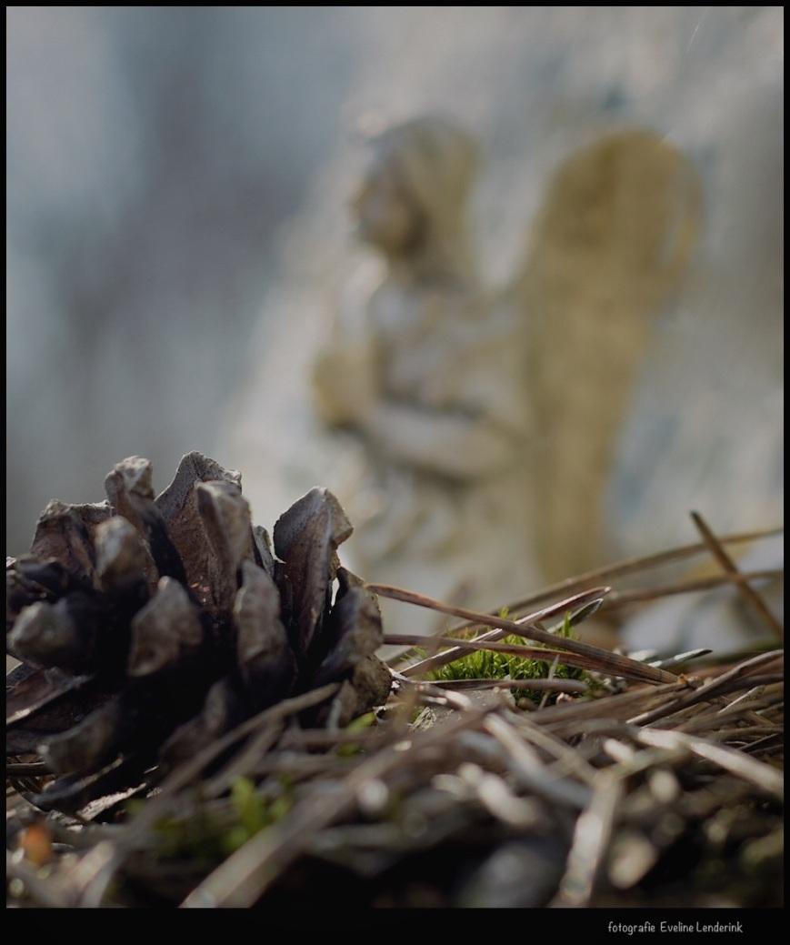 Monumentje in het bos