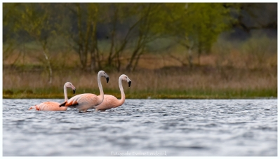 flamingo_DSC8053 - 2017-04-06 at 15-28-24 2